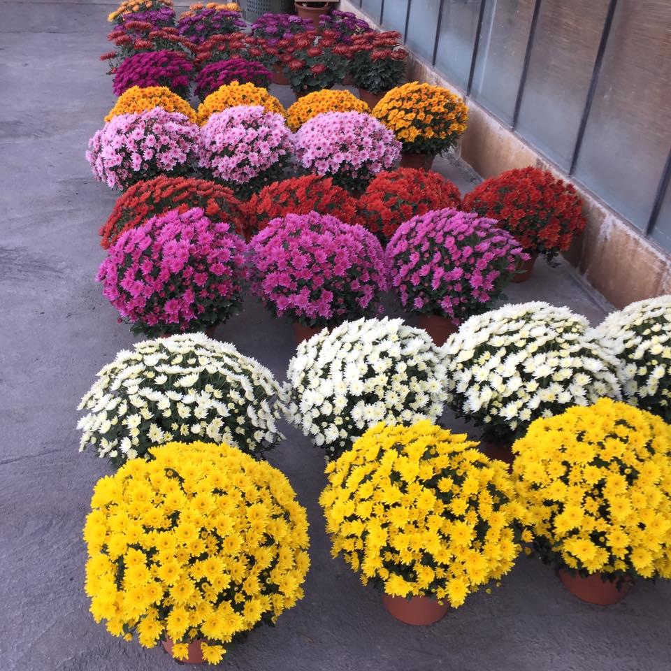 Alberi Ornamentali Da Giardino orto e giardinaggio | trento, tn | casa dell'agricoltore